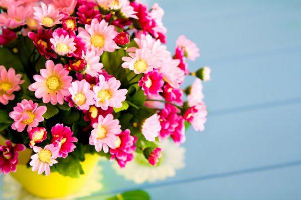 bukiet kolorowych kwiatów w żółtej doniczce